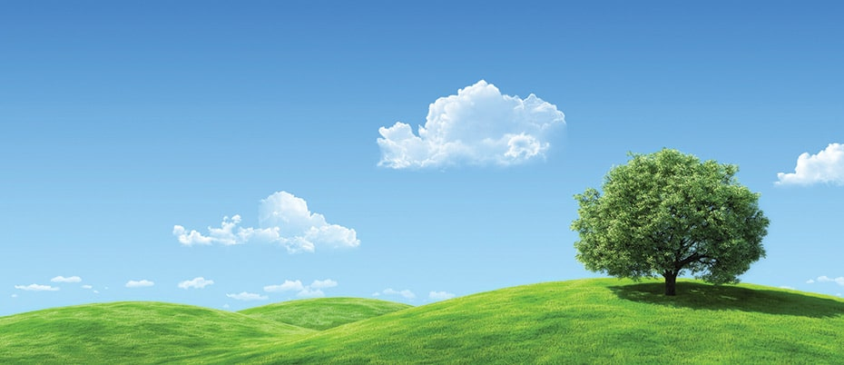 A lone tree on hillside with clouds and sky