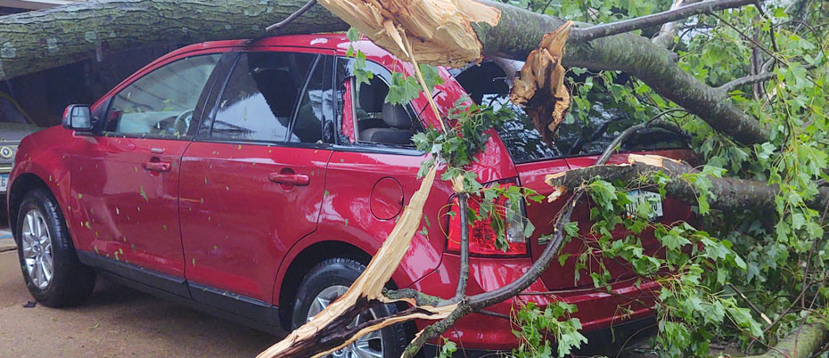 Disaster assistance: Vehicle with large tree limb on it and broken windows